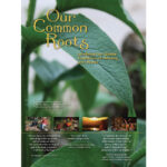 Our Common Roots DVD cover_white